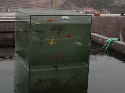 屋顶锦鲤池