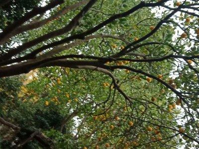 实景:秋的果实