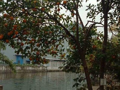 秋的果实1