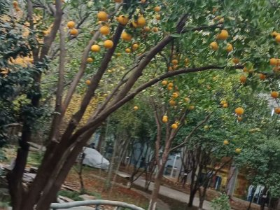 宇华纺织园区